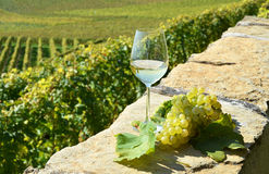Wine and grapes. Royalty Free Stock Photography