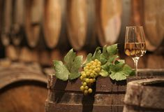 Wine Grapes in a Wine Cellar royalty free stock photography