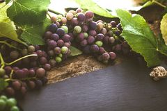 Grapes on wood royalty free stock photo
