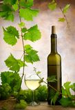 Wine and grapevine stock image