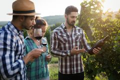 Wine grower and people in vineyard Royalty Free Stock Image