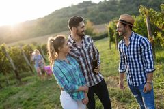 Wine grower and people in vineyard. Wine grower and people in winery vineyard Royalty Free Stock Photography