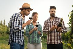 Wine grower and people in vineyard Stock Photos