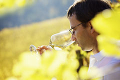 Wine grower tasting wine. Serious male winemaker holding a glass to taste wine in vineyard with blurred vine leaves in foreground Stock Images