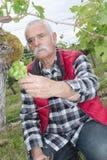 Wine grower working in vineyard Stock Photography