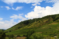 Wine growing area in Eifel Stock Photography