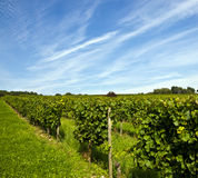 Wine-growing area Royalty Free Stock Photography