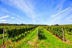 Wine-growing area Stock Image