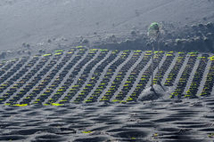 Wine-growing area La Geria on the Island of Lanzarote Royalty Free Stock Photography