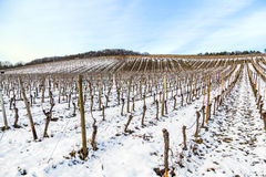 Wine-growing area near Kloster Eberbach covered with snow Stock Photo