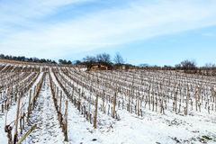 Wine-growing area near Kloster Eberbach covered with snow Royalty Free Stock Photo