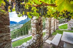 Wine growing at Castello di Avio Trento Stock Photography