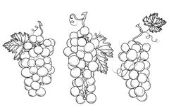 Wine growing contour design elements Royalty Free Stock Photos