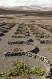 Wine growing on Lanzarote Stock Photos