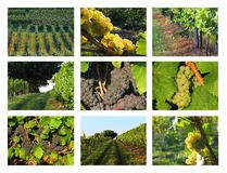 Wine-growing / wine collage royalty free stock photos
