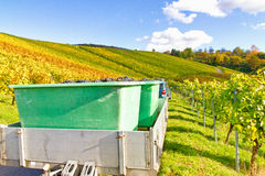 Wine harvest in autumn. Wine harvest in a vineyard. In foreground a trailer with harvested wine grapes Royalty Free Stock Photography