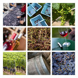 Wine and harvest collage. Harvest and wineries on a collage stock photos