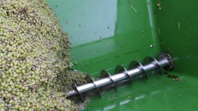 Wine harvest at mosel river Germany. grapes on a tractor trailer. Wine harvest at mosel river Germany. grapes on a tractor trailer stock footage