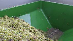 Wine harvest at mosel river Germany. grapes on a tractor trailer. Wine harvest at mosel river Germany. grapes on a tractor trailer stock video
