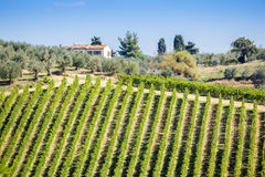 Wine Hill Italy Royalty Free Stock Photo