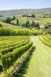 Wine Hill Italy Stock Photo