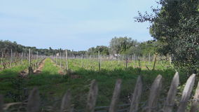 Wine hills and vineyards stock footage