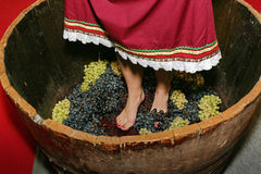 The wine holiday. At the celebration of winemaking girl squeezes legs juice of different grape varieties Stock Image