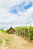 Wine house in summer. Summer day on grape fields at the wine house Royalty Free Stock Images