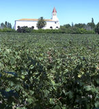 Wine industry in Chile Stock Photos