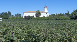 Wine industry in Chile. Fields of vineyards in central Chile. Growing grapes for industrial use: wine. The Chilean wine industry is the 7th world producer and royalty free stock photos