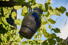 Wine Jug hanging between grapevines Stock Photo