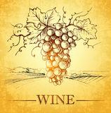wine. label with branch grapes, royalty free illustration