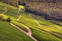 Wine landscape Stock Images