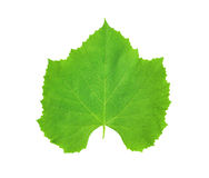Wine leaf Royalty Free Stock Photo