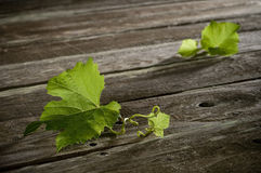 Wine Leaf Background Royalty Free Stock Photography