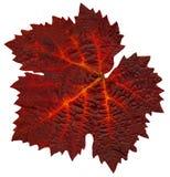 Wine_leaf_Fall0 Stock Afbeeldingen