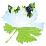Wine leaf frame Stock Images
