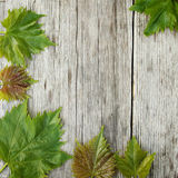 Wine leaves frame Royalty Free Stock Image