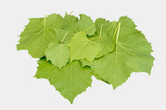 Wine leaves isolated on white. Background Stock Images