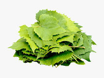 Wine leaves isolated on white. Background royalty free stock photos