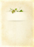 Wine list menu. With grapes green leafs on the old blank paper. Vintage background for the wine poster on textured old parchment Royalty Free Stock Images