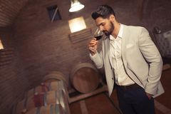 Wine maker testing wines. In winery basement Royalty Free Stock Images