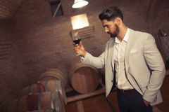 Wine maker testing wines Stock Image