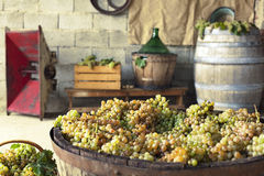 Wine making equipement on the background. Grapes ready to become good wine Royalty Free Stock Images