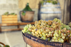 Wine making equipement on the background. Italian wine making equipement on the background Stock Image