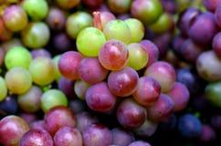 Wine making process Stock Photo