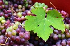 Wine making process Stock Photography