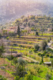 Wine mountains close to Valldemossa (Majorca) Stock Photos