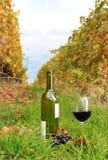 Vinho na região de Lavaux, Switzerland fotografia de stock royalty free