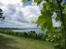 Wine och lake Arkivbild